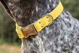 Yellow Waterproof Collar