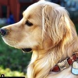 Golden Retriever wearing Rita Bean Heavy Duty Engraved Buckle Collar (Chestnut)