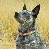 Kuki loves her Rita Bean Mod Stripe Collar!