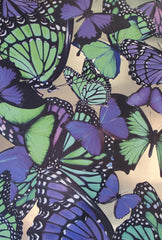 Butterflies Wallpaper by Circa Wallcovering