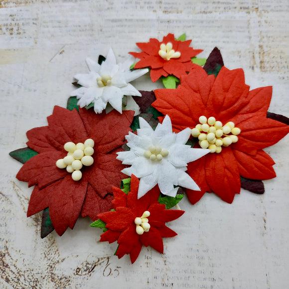 Set of Mulberry Flowers - Poinsettias