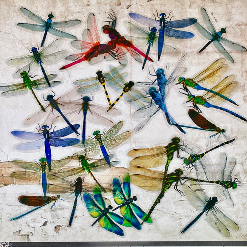 Acetate Dragonfly Stickers