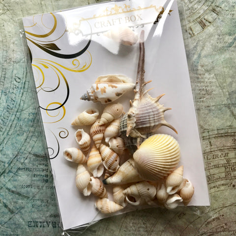 BACKORDER: By The Sea - Large pack of natural shells