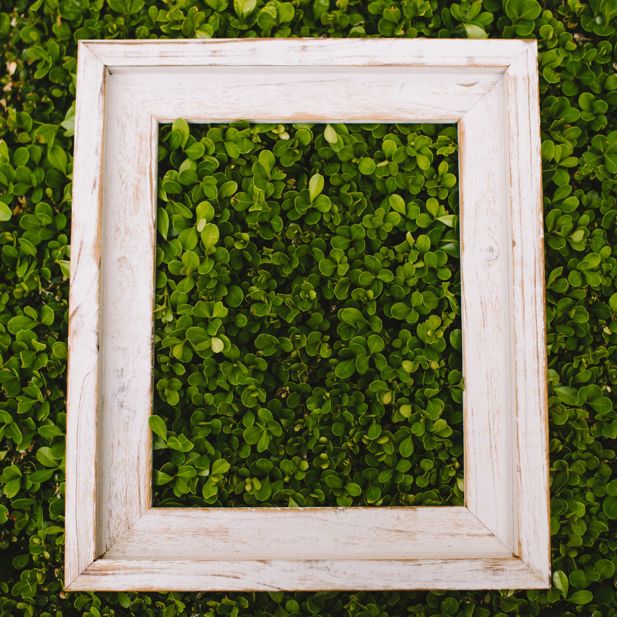 Handcrafted Picture Frames for Sale   Chirpwood, LLC - Chirpwood LLC