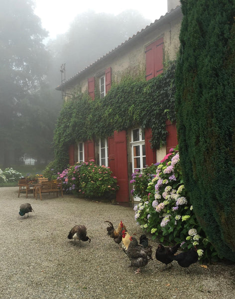 South wing of chateau and its chickens near Revel France