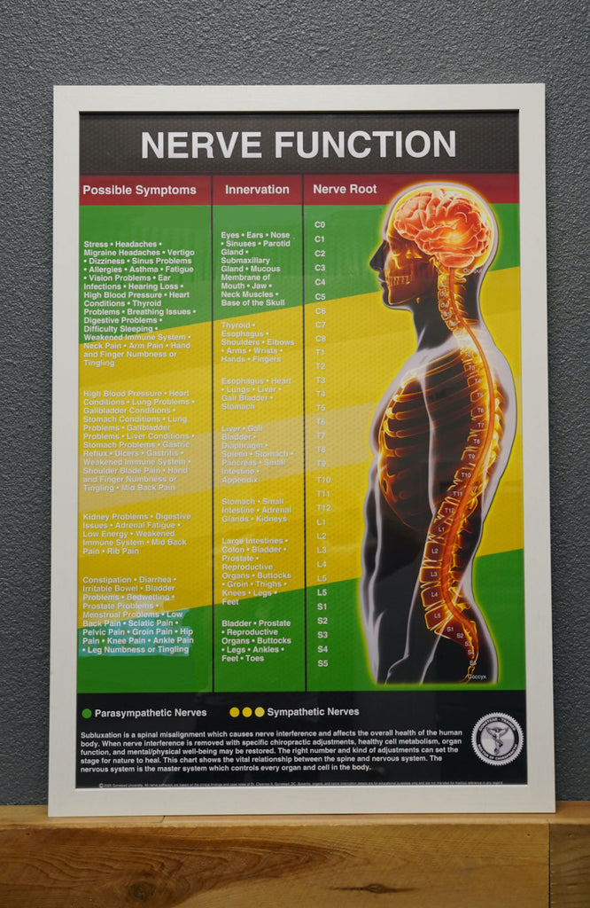 Nerve Function Poster