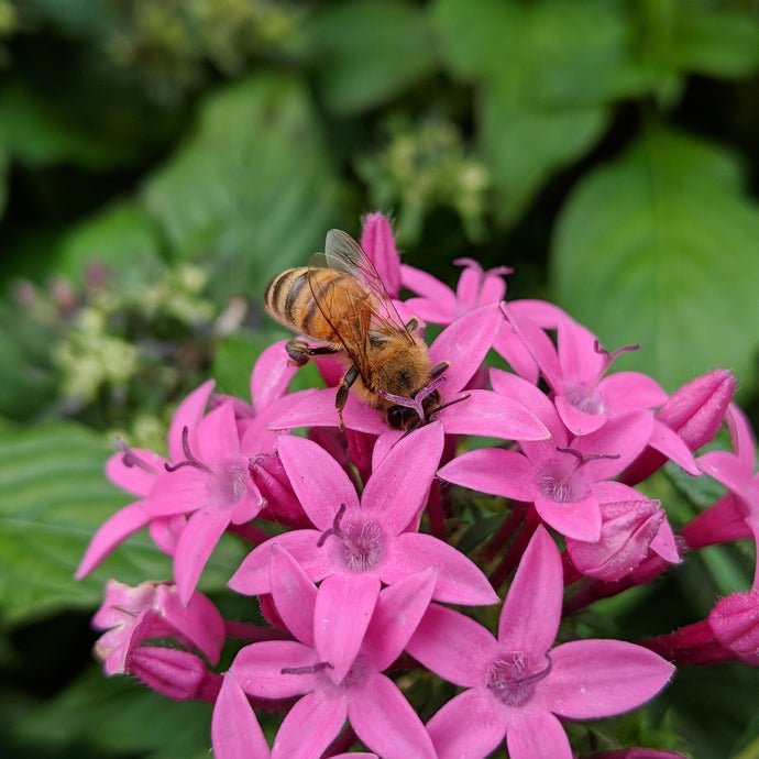 22 Plants That Pollinators Love