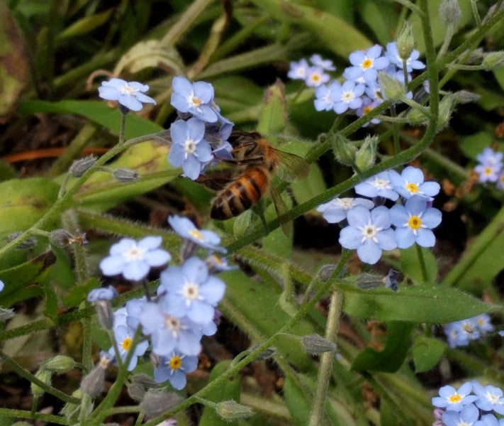 Neonics are slowly killing our bees
