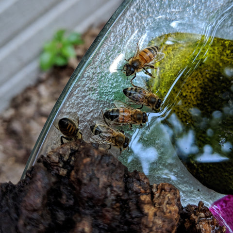 A row of bees at the edge of the water on a bird bath