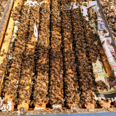 Honeybees have consumed their winter stores