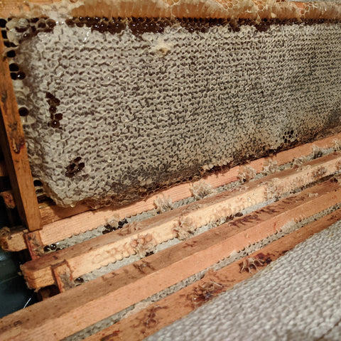 Frames of capped honey