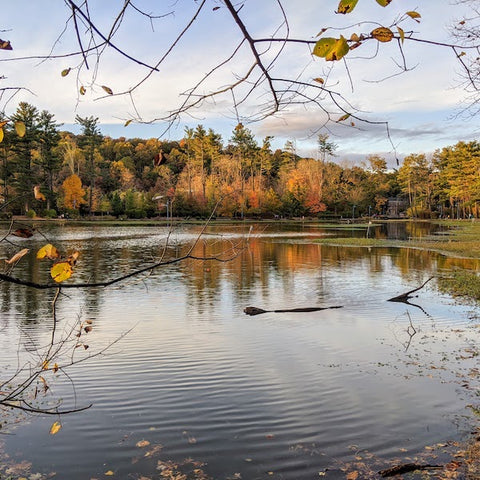 Magnificent autumn colors in mirror image over the reservoir at the South Mountain Reservation showcases breathtaking beauty. The foreground is framed by dry branches with a few remaining yellow leaves.