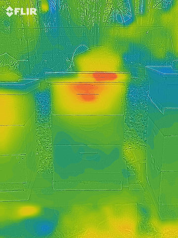 Honey bees seen inside a hive with a thermal camera.