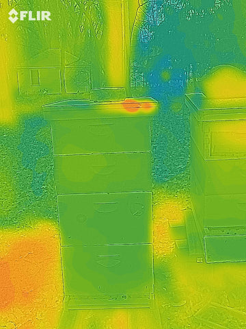 Thermal image of a dead hive