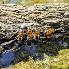 Four bees drinking water from piece of floating bark. Their reflections an the water, and their shadoes on the floor of the bird bath paint a stunning picture under the sunshine.