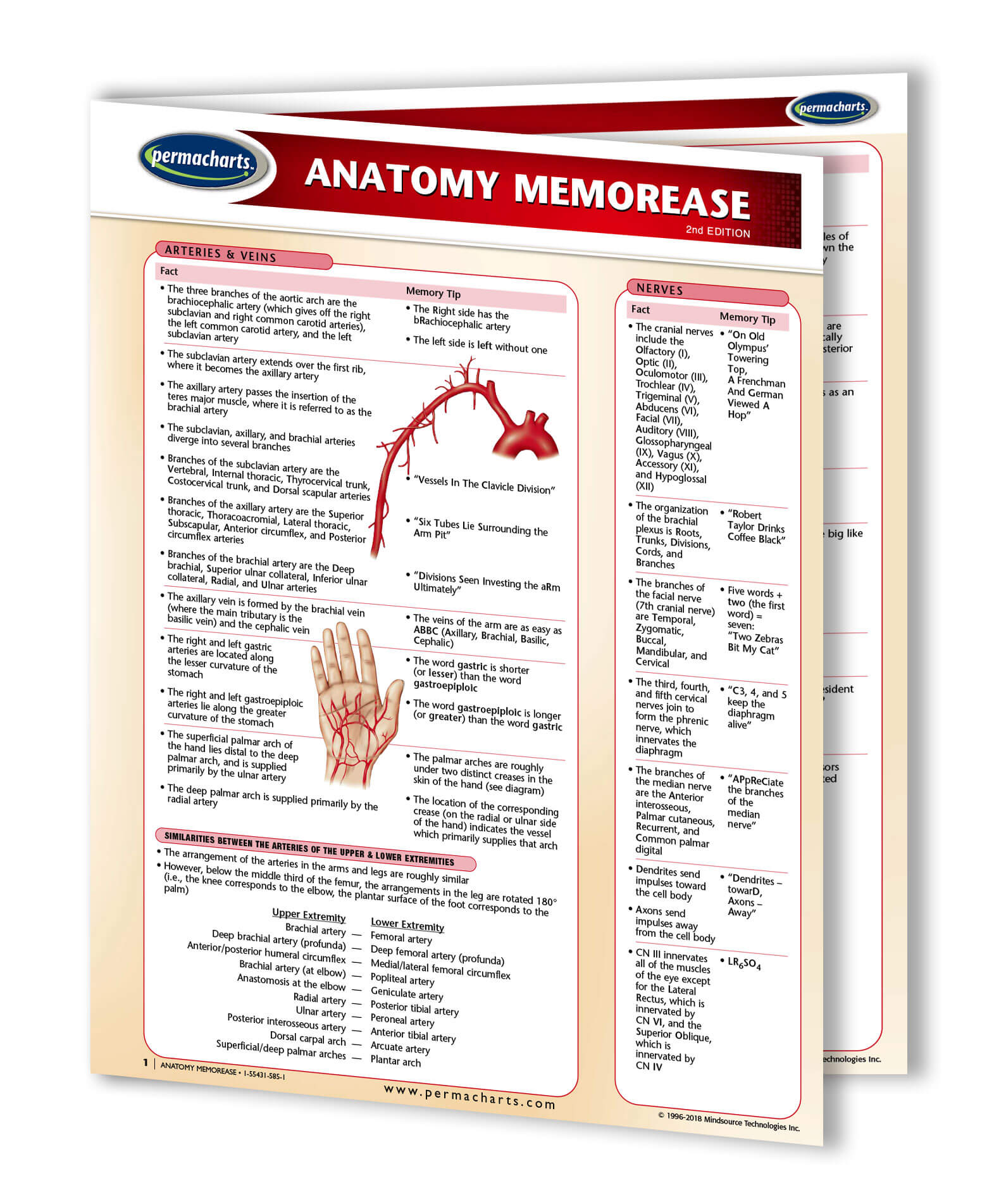 Anatomy Memory Aids - Nursing Reference Quick Reference Guide