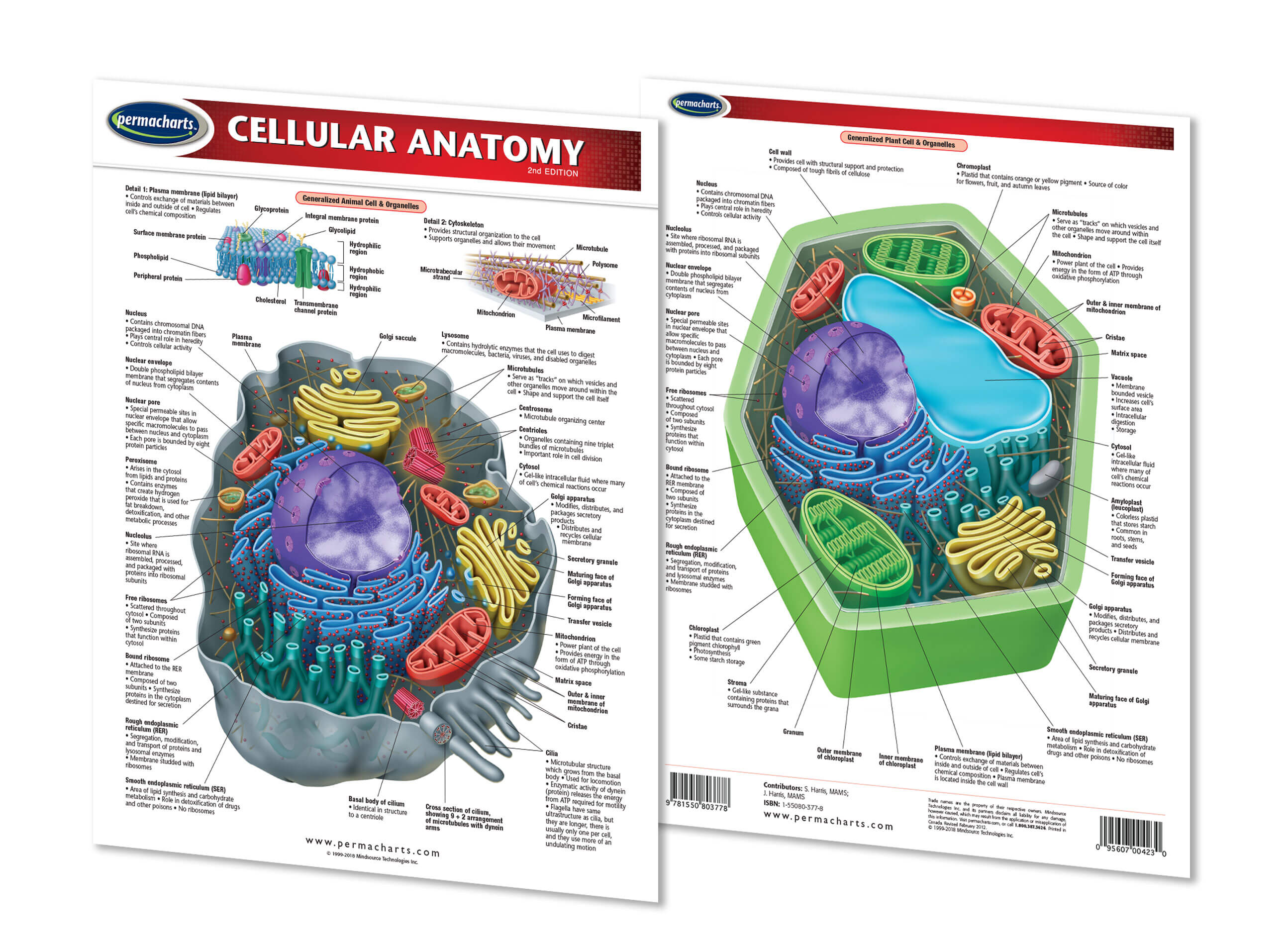 Cellular Anatomy Chart Biology Quick Reference Guide