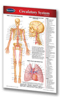 Medicine & Anatomy - Circulatory System (Pocket)