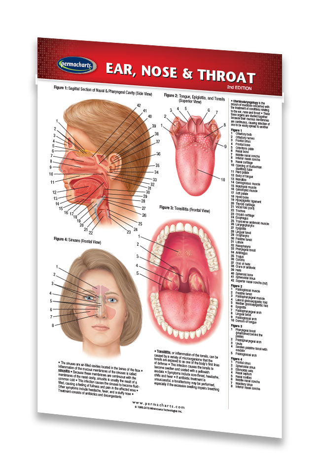 Ear Nose And Throat Guidelines Pocket Size Quick Reference