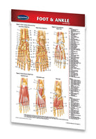 Foot and Ankle pocket medical reference guide chart