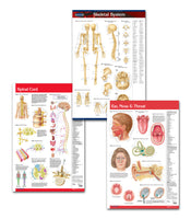 Medical office art anatomy poster bundle