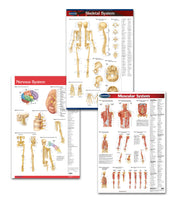 Physiotherapist office art medical poster bundle: Permacharts