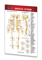 Skeletal System - Medical Pocket Chart - Quick Reference Guide