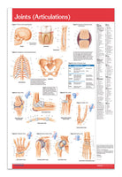 Joints (articulations) Poster