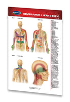 Medicine & Anatomy - Trigger Points I: Head & Torso (Pocket Size)