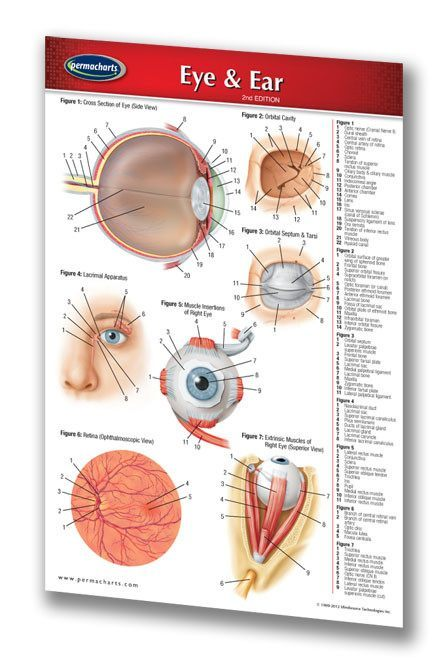 Eye and ear anatomy chart pocket size laminated reference guide medicine anatomy eye ear medical pocket size ccuart Image collections