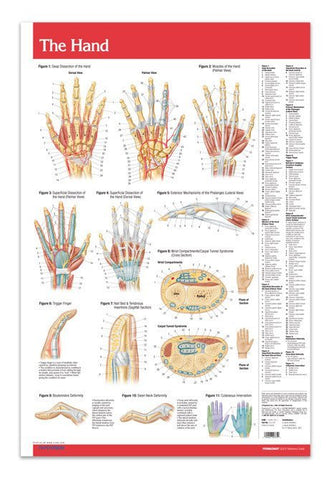 Hand - Joints Articulations Poster