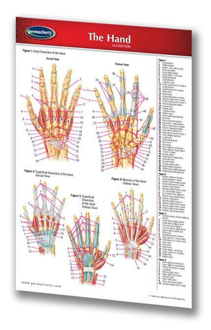 Medicine & Anatomy - Hand (Pocket Size)
