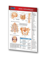 Medicine & Anatomy - Joints (Articulations) (Pocket Size)