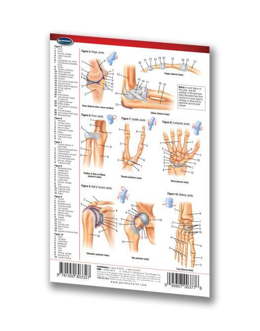 Joints Articulations (Pocket Size) - Quick Reference Guide