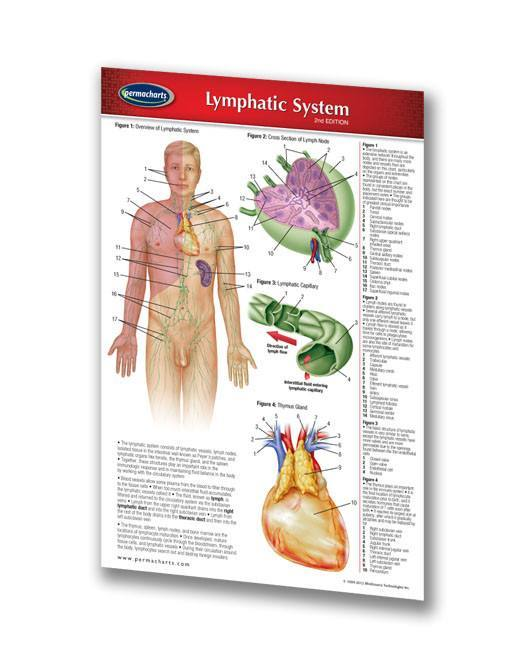 Lymphatic System Chart Laminated Pocket Size Quick Reference Guide