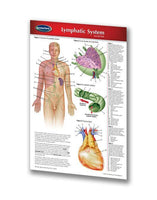 Medicine & Anatomy - Lymphatic System (Pocket Size)