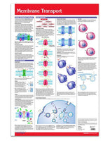 Membrane Transport Poster Laminated: Permacharts