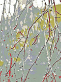 Garden Collection - Coloured Birch