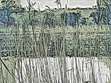 Country Collection - Rother Rushes