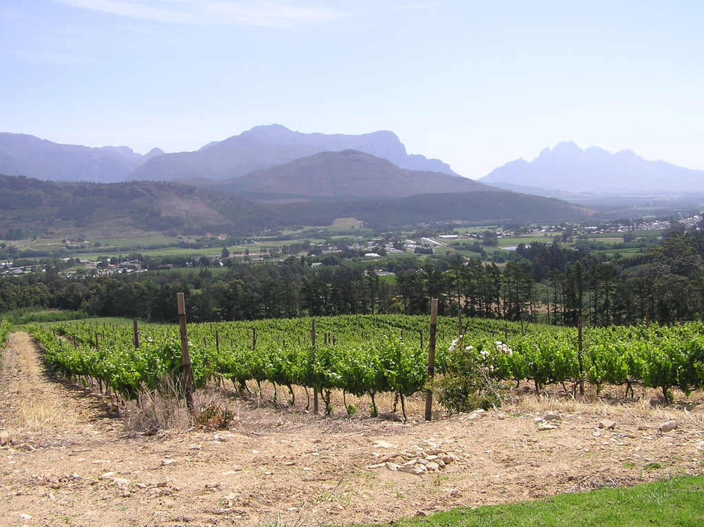 South Africa Vines
