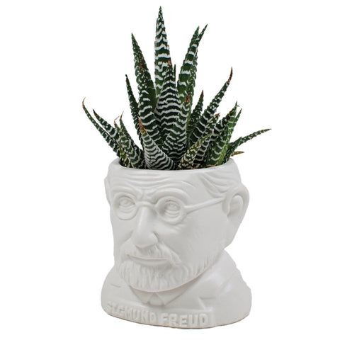 White ceramic mini planter in the form of a bust of Sigmund Freud. Shown with cacti planted.