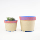 TTAM Planter Blue/ Flame anemone