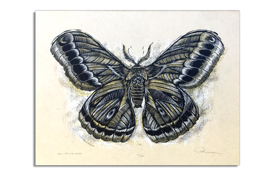 Reconstructed Moth by Dan Grzeca