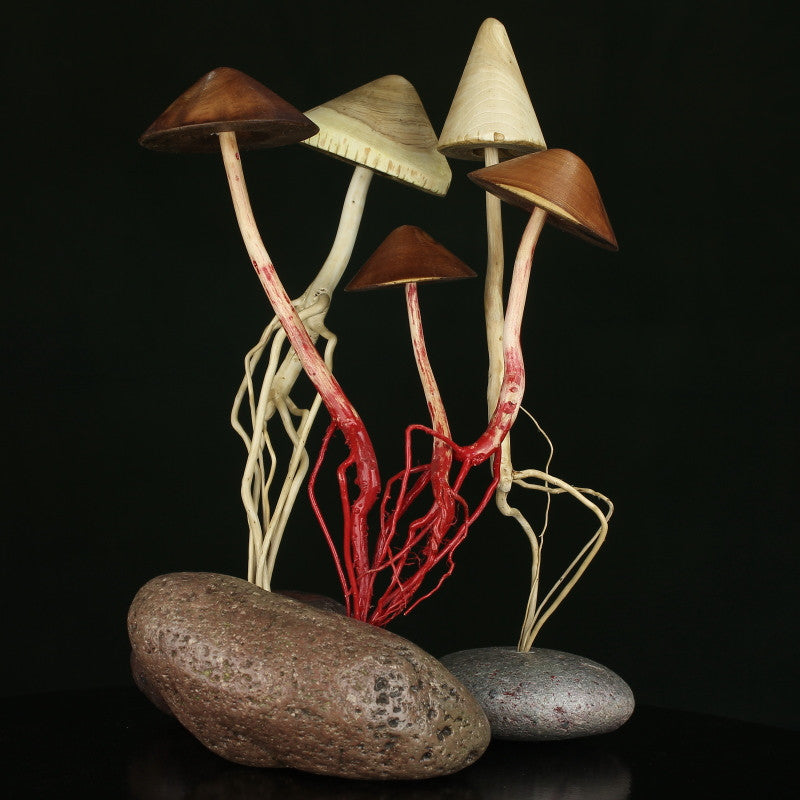 a cluster of artistic wood, tree, roots, and rock mushrooms