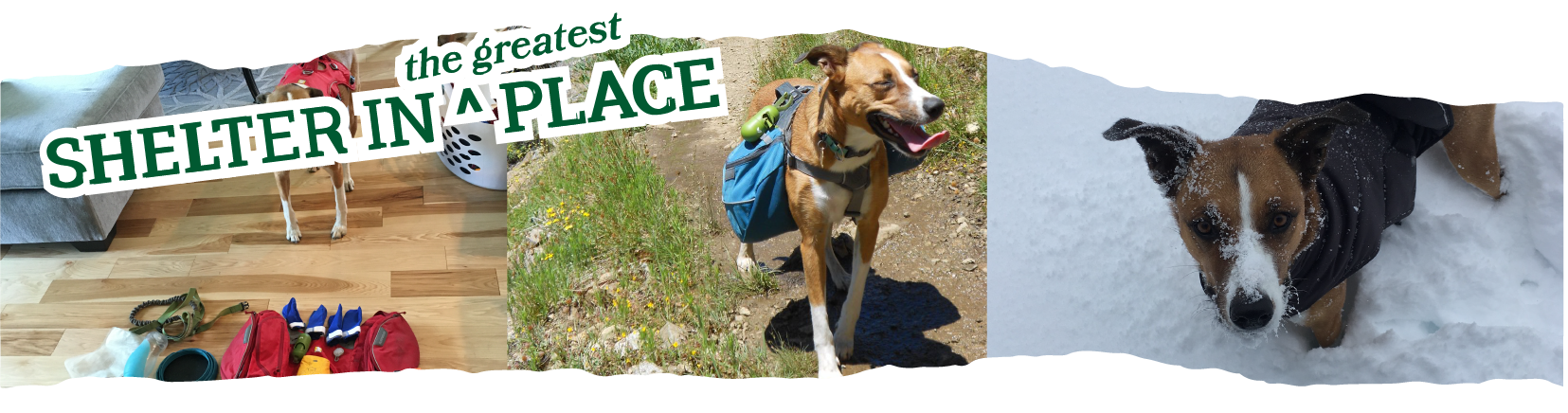 Title Text: Shelter in the Greatest Place laid over a triplicate image of a cute dog on several backpacking trips.