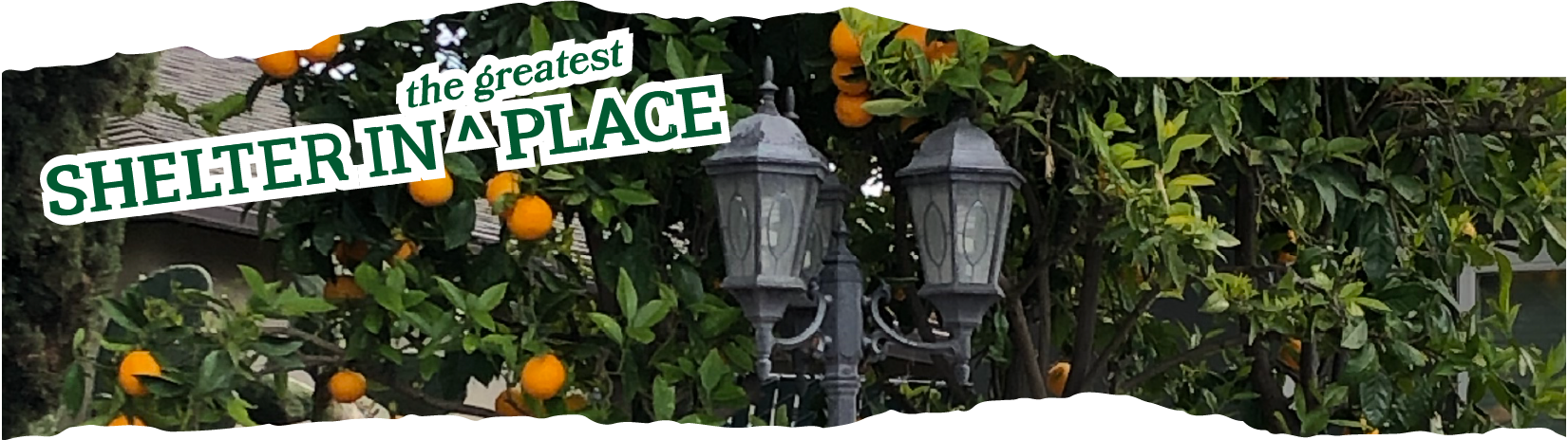 Title: Shelter in the Greatest Place laid over a photo of an old fashioned double sided lamp post being engulfed by an orange tree ladened with fruit.