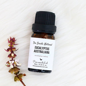 eucalyptus radiata, eucalyptus australiana, 澳洲尤加利精油, 尤加利精油, moisquito repellent, essential oil Malaysia, clear sinusitis, relieve chestiness and stuffed nose, reduce coughs, fight a cold, oily skin, acne, vapor rub, the seeds natural
