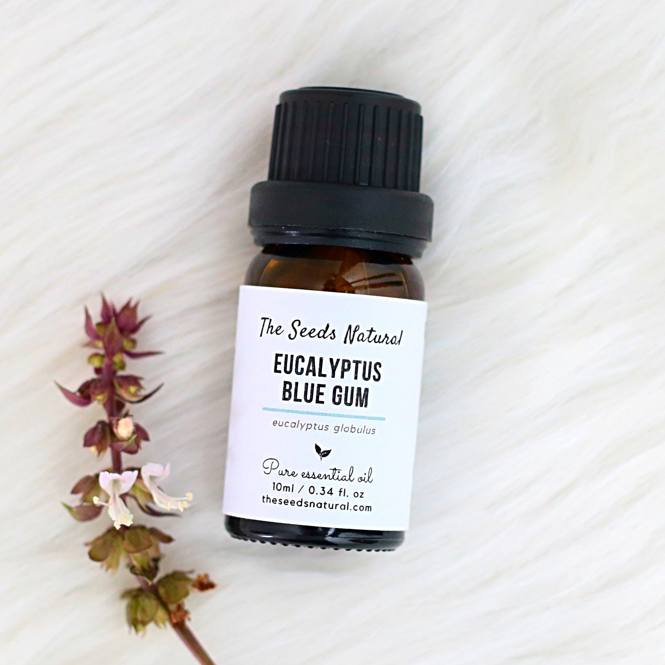Eucalyptus essential oil, eucalyptus blue gum essential oil, 蓝胶尤加利精油, 尤加利精油, moisquito repellent, treat respiratory issues including cough, cold, nasal congestion, bronchitis, and sinusitis, relieves muscle pain, the seeds natural