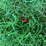 Easy To Spot Red Hose Washers by DieHard Nozzles and Garden Tools 12 Pack