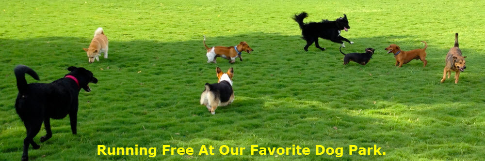 Great Deals On Australian Cattle Dog Merchandise With Free Shipping!